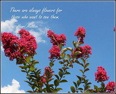Photograph - Crepe Myrtle Blossoms And Blue Skies by Dora Sofia Caputo Photographic Design and Fine Art