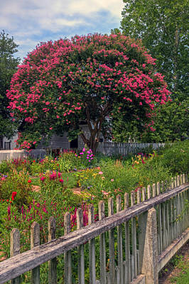 Photograph - Crepe Myrtle In A Garden by Jerry Gammon
