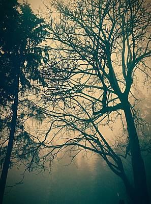 Photograph - Crept by Lauren Williamson