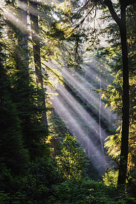 Photograph - Crepuscular Rays Through The Trees At Redwood National Park by Vishwanath Bhat