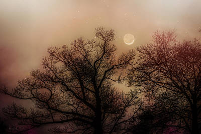 Moon Photograph - Crescent Between The Trees by Bob Orsillo