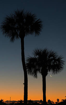Photograph - Crescent Moon Palm Dawn Delray Beach Florida by Lawrence S Richardson Jr