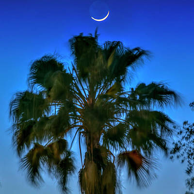 Waning Moon Photograph - Crescent Over Palm by Marvin Spates