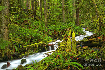 Photograph - Crescent Rainforest Stream by Adam Jewell
