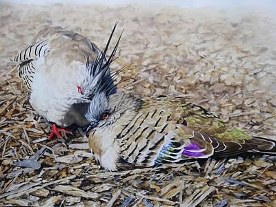 Wall Art - Painting - Crested Australian Pigeon by Julian Wheat