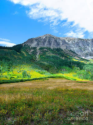Photograph - Crested Butte Aspens by Susan Warren