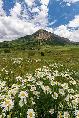 Photograph - Crested Butte Wildflowers by Ronda Kimbrow