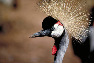 Exotic Photograph - The I Can't Believe It Bird by Carl Purcell