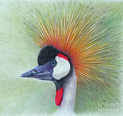 Painting - Crested Crane by Phyllis Howard