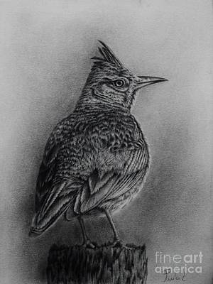 Drawing - Crested Lark  by Paula Ludovino