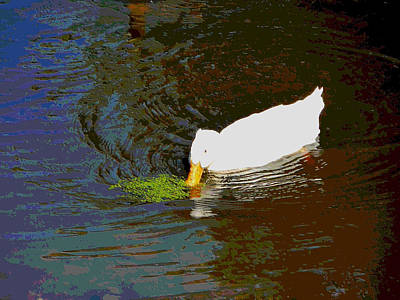 Crested Duck Painting - Crested White 1 by Lanjee Chee