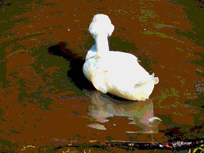 Crested Duck Painting - Crested White 3 by Lanjee Chee