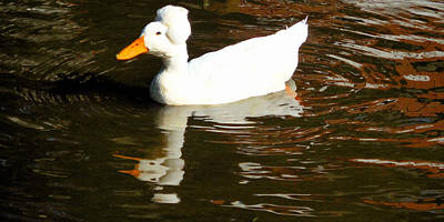 Crested Duck Painting - Crested White 6 by Lanjee Chee