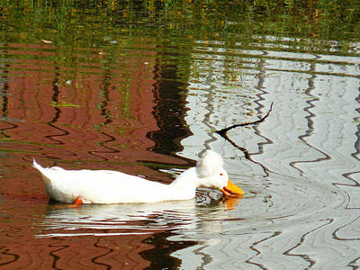 Crested Duck Painting - Crested White 7 by Lanjee Chee