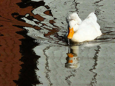 Crested Duck Painting - Crested White 8 by Lanjee Chee