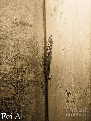 Photograph - Crevice Life by Fei A