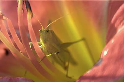 Photograph - Cricket Portrait 1 by Brian Hale
