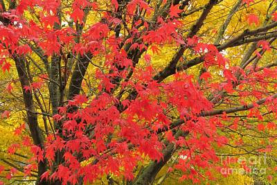Photograph - Crimson And Gold by Frank Townsley