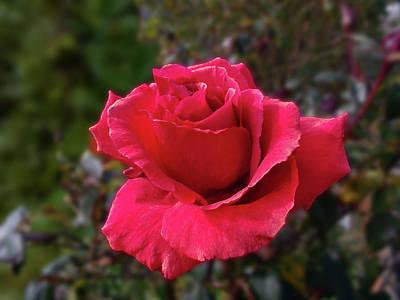 Photograph - Crimson Carmine by Mark Blauhoefer
