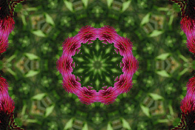 Photograph - Crimson Clover Kaleidoscope by Robyn Stacey