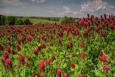 Photograph - Crimson Clover Patch by Barbara Bowen