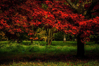 Photograph - Crimson Fall by Stewart Scott