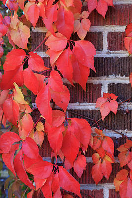 Photograph - Crimson Leaves by David Chandler