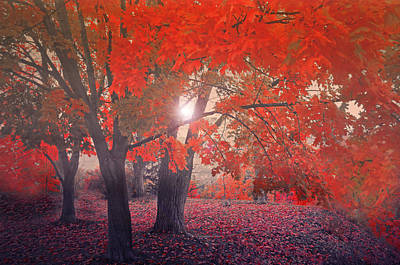 Photograph - Crimson Leaves In The Mist by Tara Turner