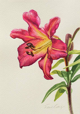 Oriental Lily Painting - Crimson Lily 1 by Fiona Craig