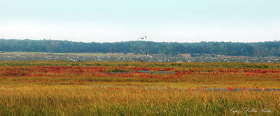 Photograph - Crimson Marsh 2 by Captain Debbie Ritter