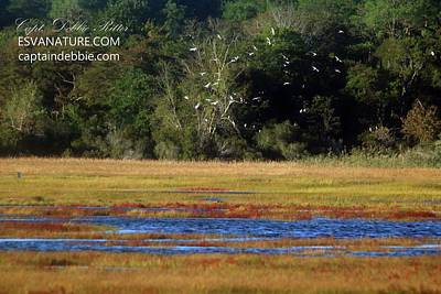 Photograph - Crimson Marsh 5 by Captain Debbie Ritter
