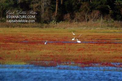 Photograph - Crimson Marsh 6 by Captain Debbie Ritter