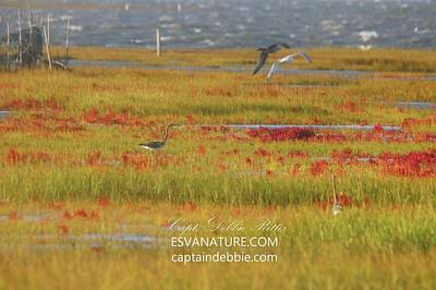 Photograph - Crimson Marsh 8 by Captain Debbie Ritter