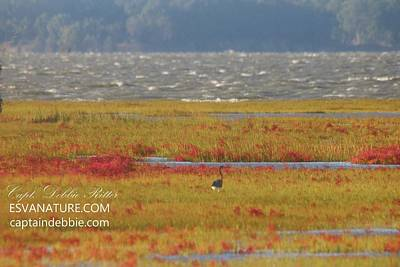 Photograph - Crimson Marsh 9 by Captain Debbie Ritter