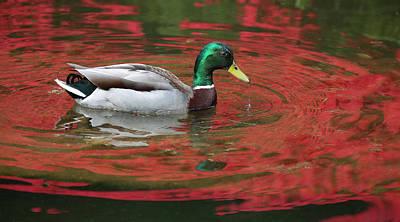 Photograph - Crimson Reflections by Elvira Butler
