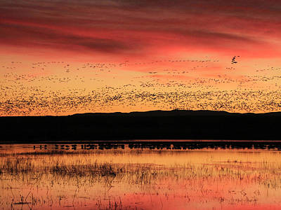 Photograph - Crimson Sunset At Bosque by Marla Craven