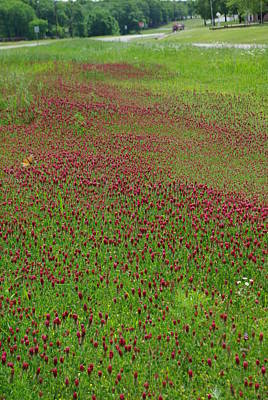 Crimson Clover Photograph - Crimson Tide by Robyn Stacey
