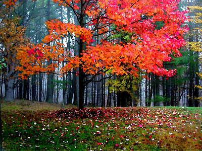 Painting - Crimson Tree by Paul Sachtleben
