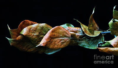 Photograph - Crinkled Leaves 2 by Bob Christopher
