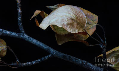 Photograph - Crinkled Leaves 4 by Bob Christopher