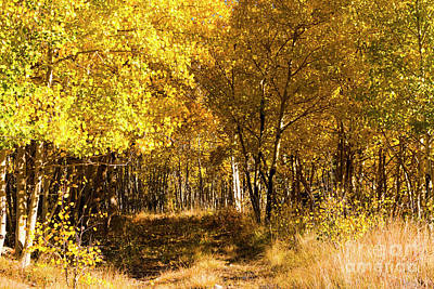 Photograph - Cripple Creek Autumn Road by Steve Krull