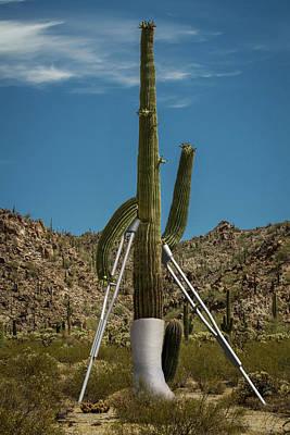 Crippled Cactus Art Print