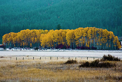 Photograph - Crisp Aspen Morning by Craig Strand
