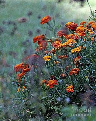 Crisp Autumn Marigolds  Art Print