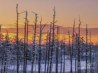 Photograph - Crispy Winter Sunrise by Claudia M Photography