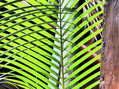 Photograph - Crisscrossing Palms by Rosanne Licciardi