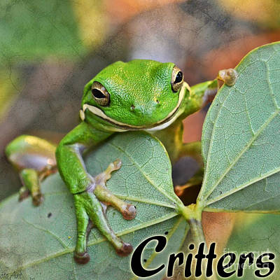 Photograph - Critters Logo by Debbie Portwood