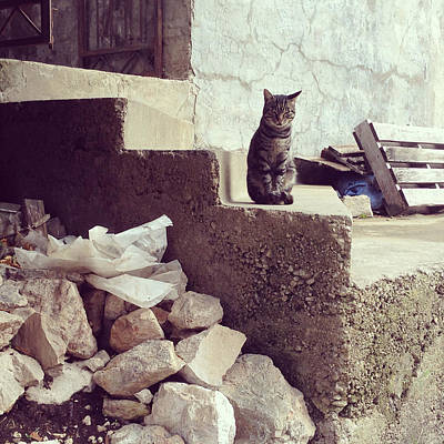 Croatian Cat Art Print