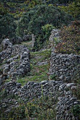 Photograph - Croatian Vineyard by Stuart Litoff