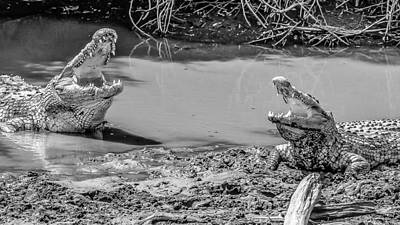 Alligator Lizards Photograph - Croc Convo by Bryan Moore